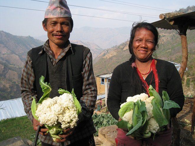 【AMDA-MINDS】ネパール事業 農業専門家募集