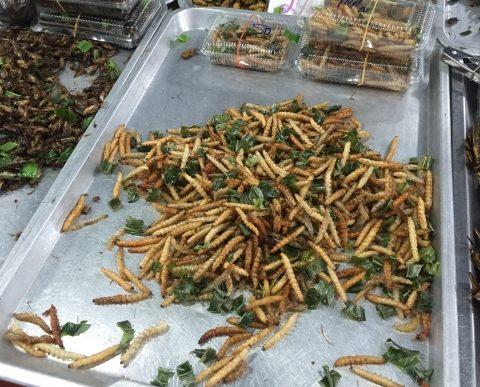 ウガンダでの食育経験から気づいた「昆虫食」の可能性