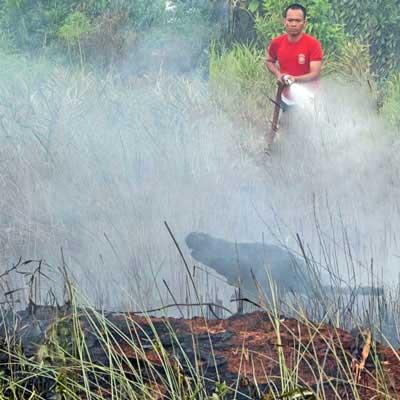 【3/10(土)】インドネシアの泥炭地回復と適正技術(第194回APEXセミナー/適正技術フォーラム第1回研究会)