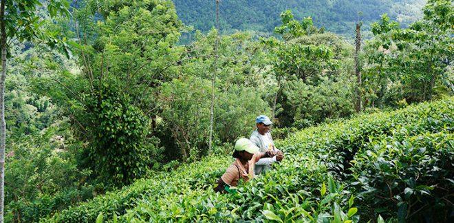 [参加者募集]10.1開催 紅茶のフェアトレードから考える~SDGsの時代に私たちができること