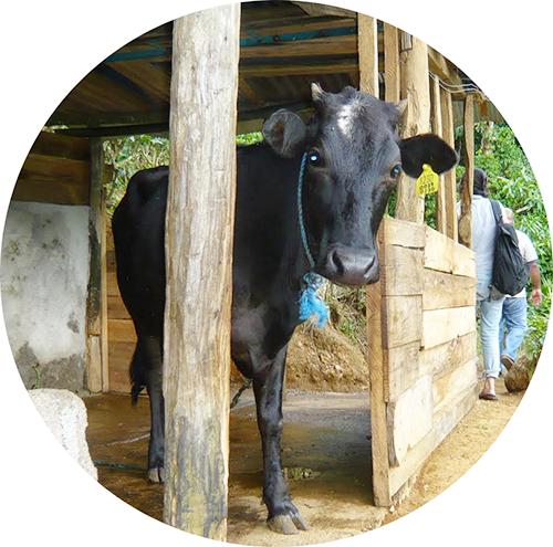 \参加者募集!/ スリランカ 南部 デニヤヤ 持続可能な紅茶づくりを支える フェアトレード 有機農業ボランティアツアー