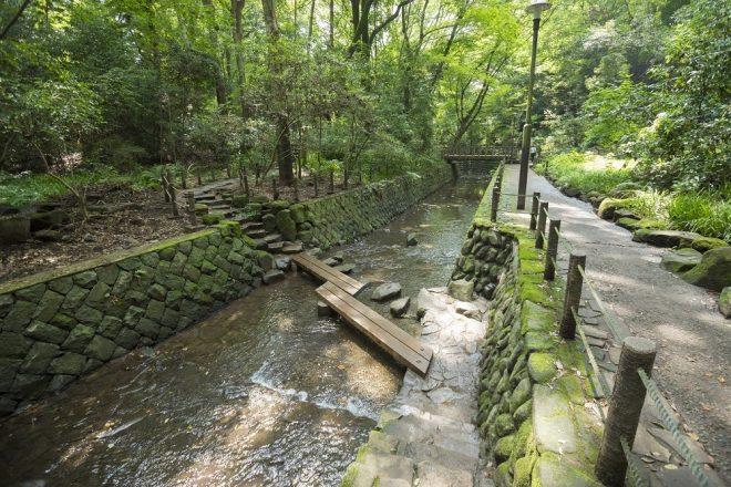 【開催終了しました】2020年10月17日(土)墨田区水の循環講座第2回「地形と水」 等々力渓谷を歩いて地形・湧水を観察しよう!